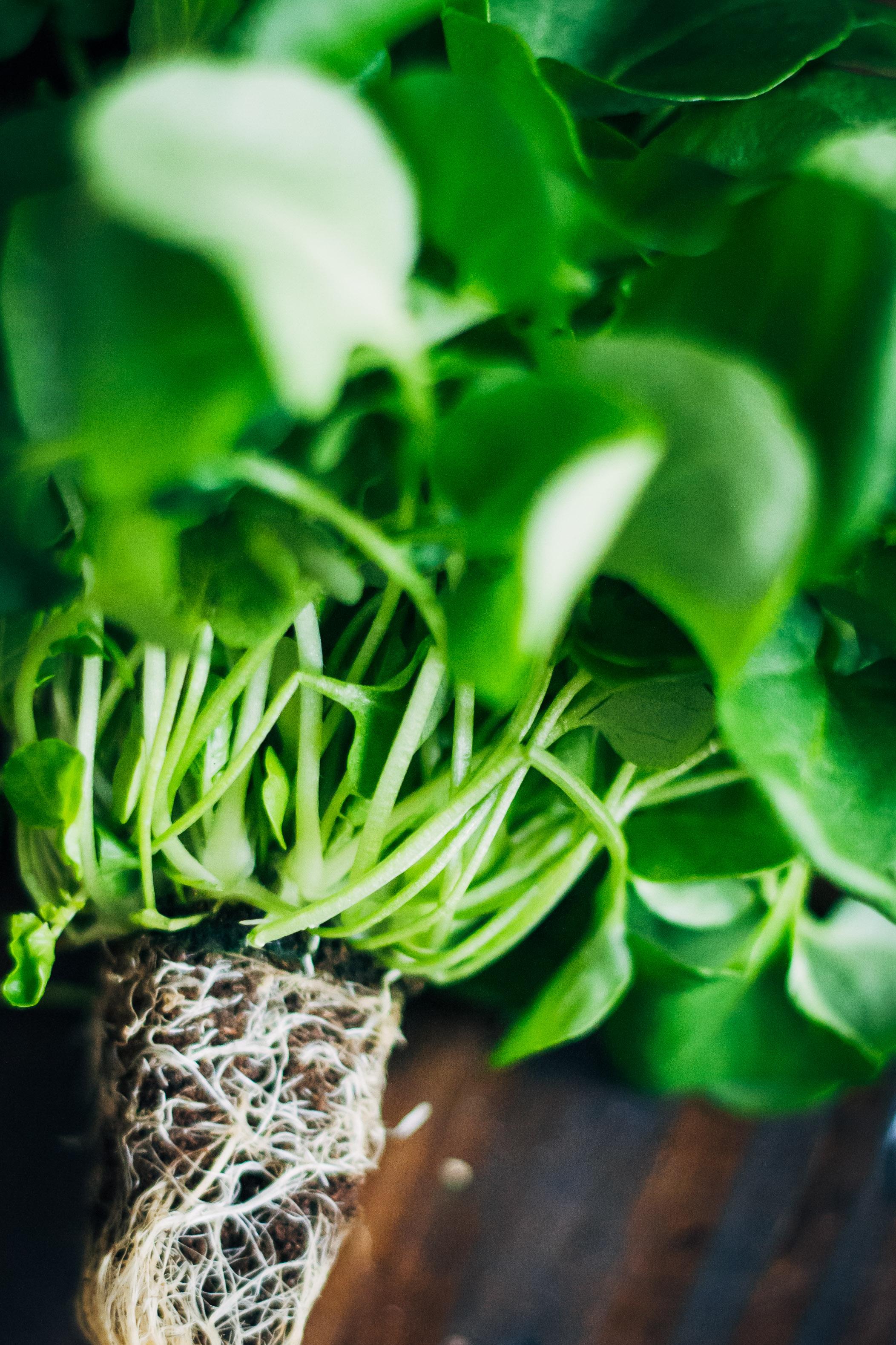 Spring Gratitude Salad   Well and Full   #vegan #recipe