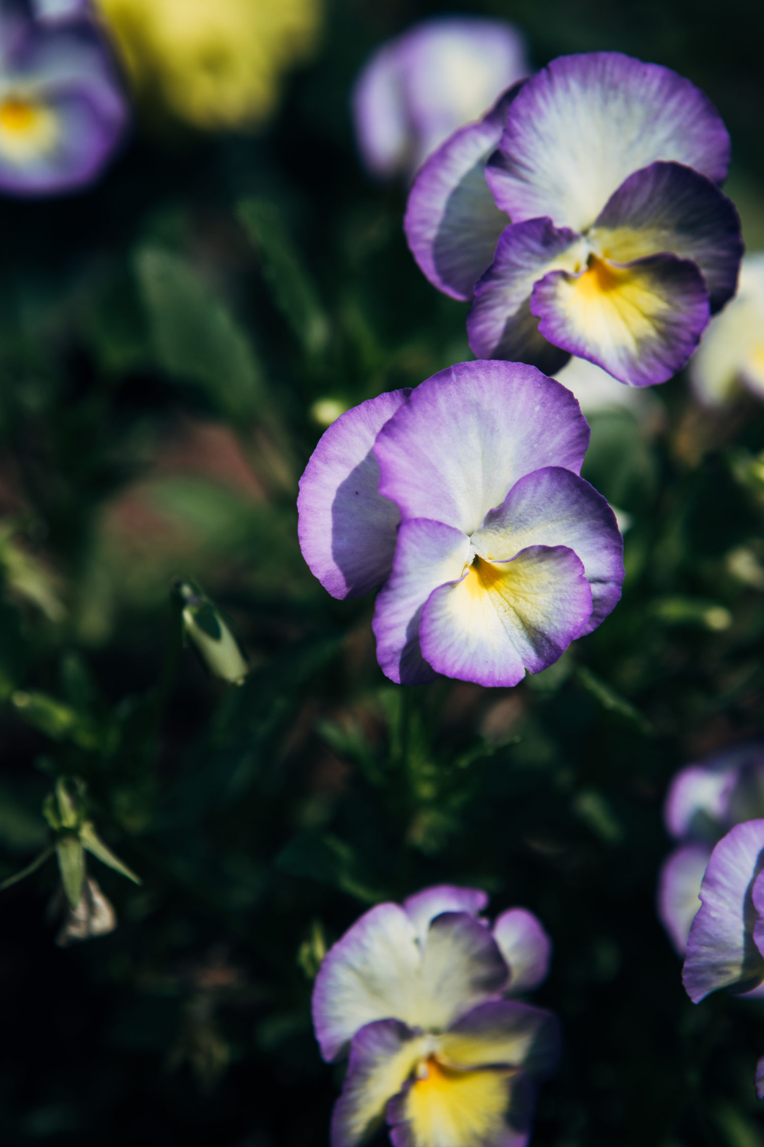 Violets | Well and Full | #flower #botanical #recipe